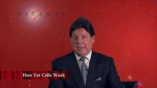 Fat Cells and Liposuction | Dr. Vitenas