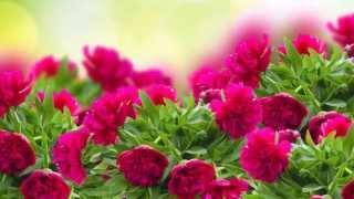 Природа, цветы, животные