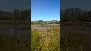 Красивое озеро в Бельмесёво Рыбалка на озере