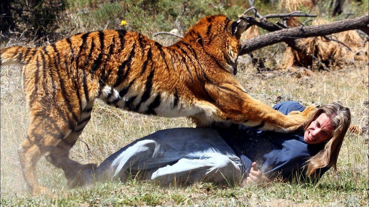 ابشع وادهش هجمات الحيوانات علي البشر.