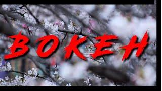 VIDEO BOKEH Full HD || Bokeh Effect
