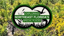 Exploring Northeast Florida's Pumpkin Hill Creek Preserve