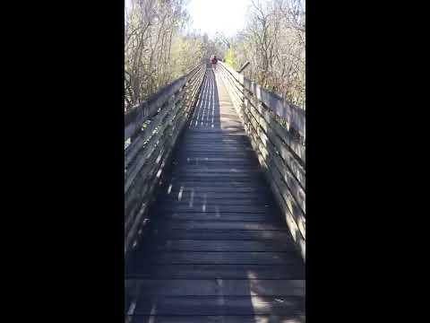 Alligator - Boardwalk - Observation Tower
