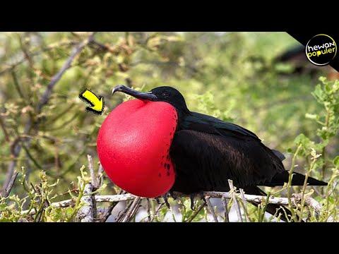 Hampir PUNAH! Inilah Burung Paling Unik dan Langka Di Dunia
