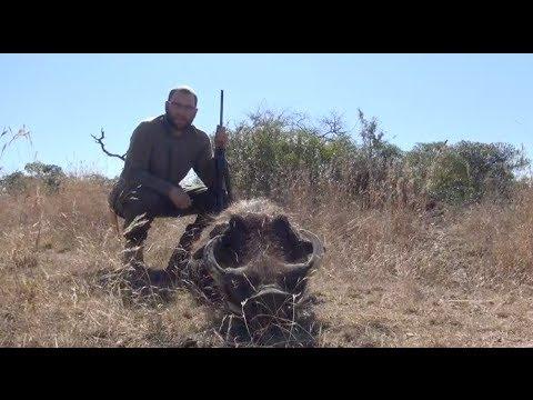 Warthog Hunting Zululand