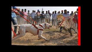 Beslemenin Türkiye'de Suç Olduğu 10 Köpek Türü