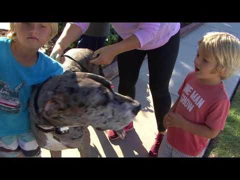 Costa Mesa Brentwood Park Dog Wall - Becky's Dog Wall