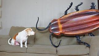 Dog vs Giant Cockroach Prank: Funny Dog Maymo