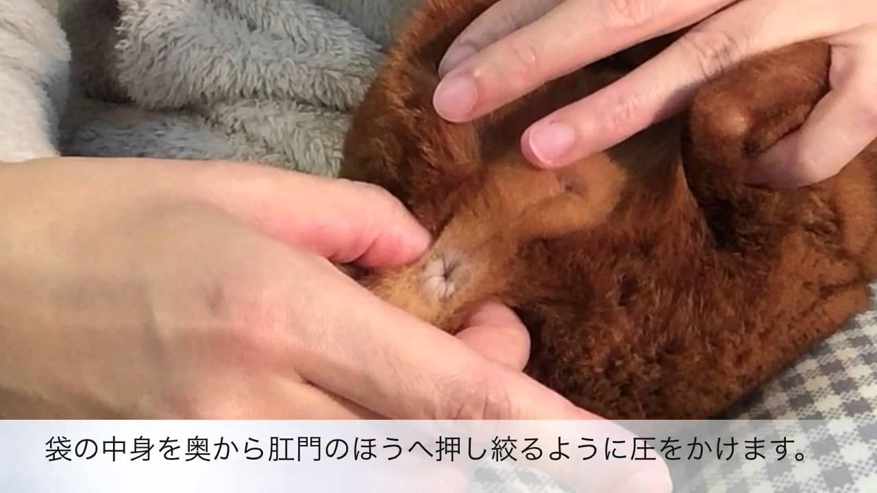 Pantyhose nancy silk daphne