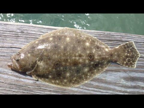 November FLounder Limit At Moses Lake