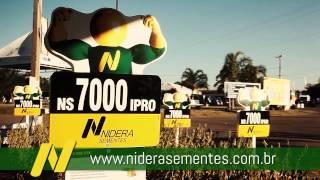 NIDERA SEMENTES-ANGULOI TV