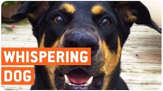 Funny Talking Dog Can Whisper Too | The Dog Whisperer