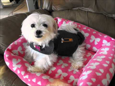 Puppy Mill Survivor ~ Opals Story