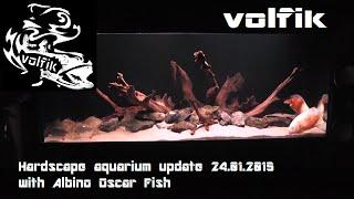 Hardscape aquarium update 24.01.2015 with Albino Oscar Fish