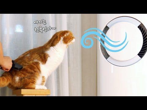 고양이도 더우면 에어컨 바람을 쐰다!