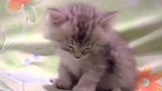 cute home videos