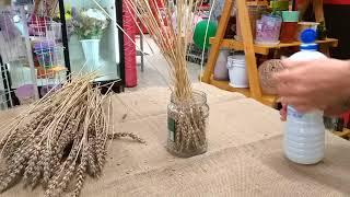 отбеливание пшеницы. До и после