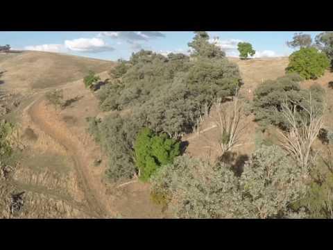 D Elder Trust For Nature site Bethanga 20.02.2017