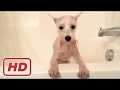 Funny Dogs VS Bath Time! - Funny Dog Bathing Compilation (BEST FUNNY ANIMAL COMPILATION)