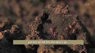 Black Soil Termite Mound