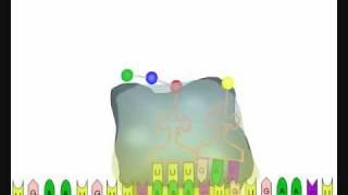 Ribosome-.wmv
