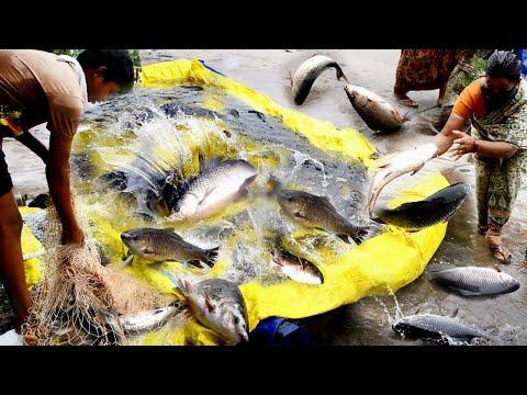 Build A Water Pond LFish Pond Fish Farmig Indian Fish Maret Maret Fish Store Pond Net Fishing