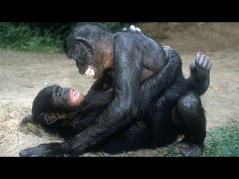 Download animals mating/breeding