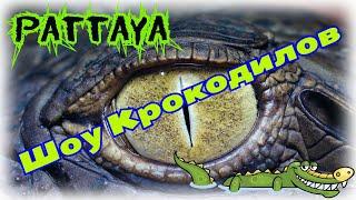 Шоу Крокодилов Паттайя Таиланд