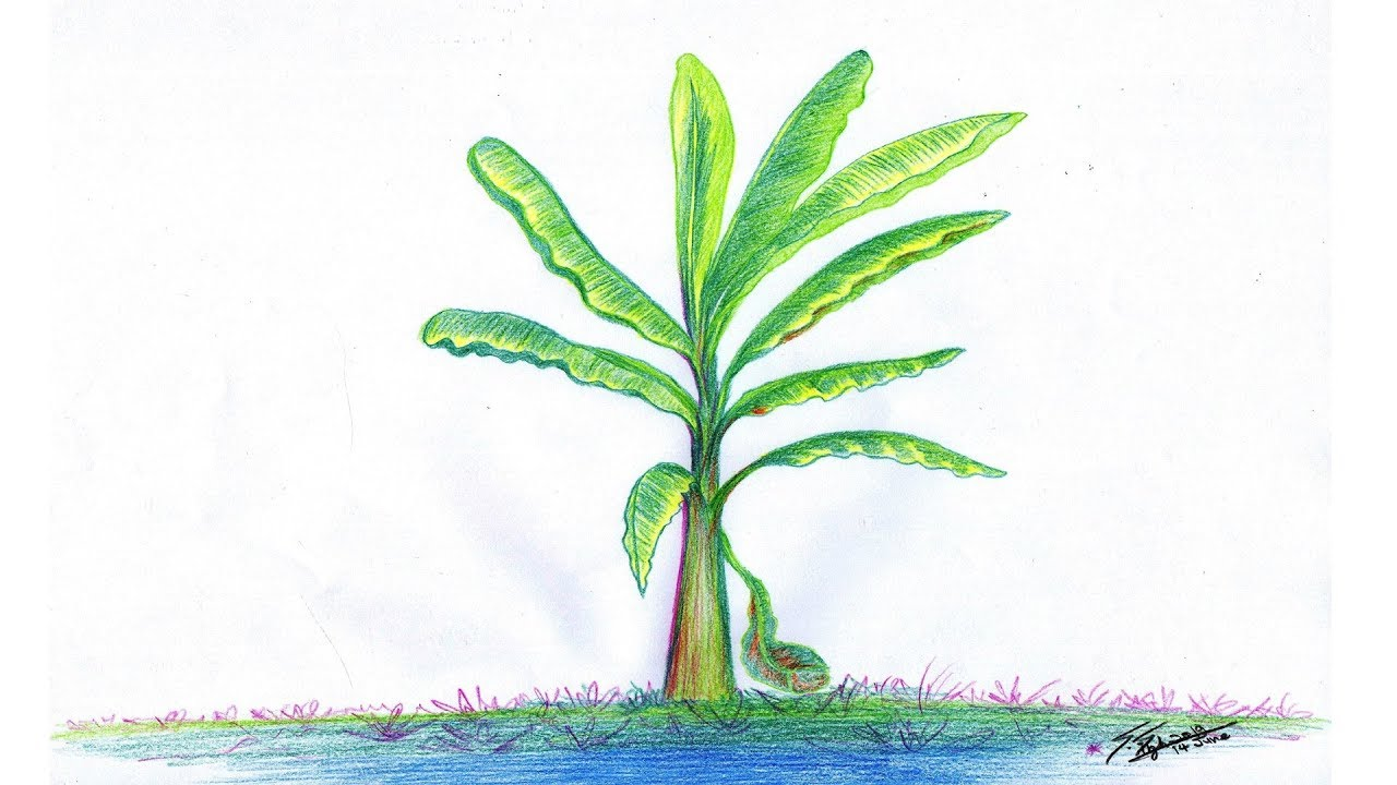 How to draw a banana tree easy step by step for beginners easy pencil drawing on paper