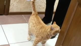 Кот пришёл с улицы оболдеть!!!!!!!