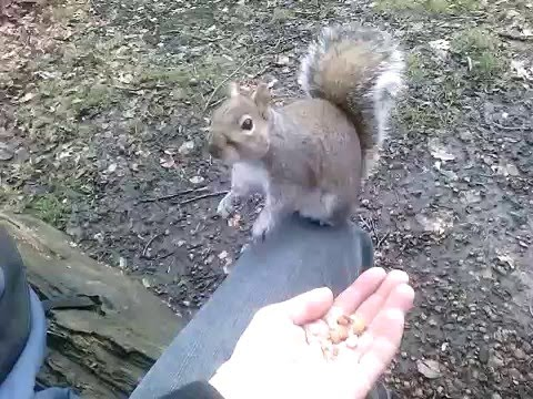 Very angry squirrel