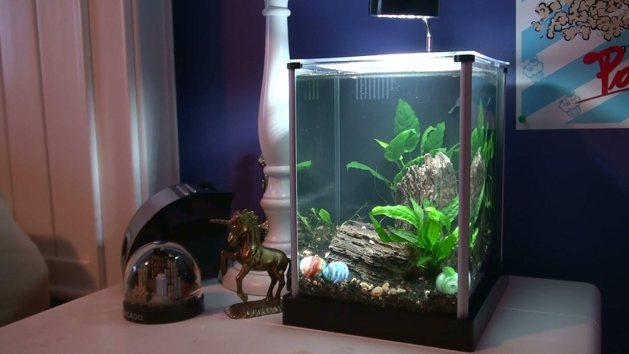 Fluval spec 2 gallon setup youtube for Two gallon fish tank