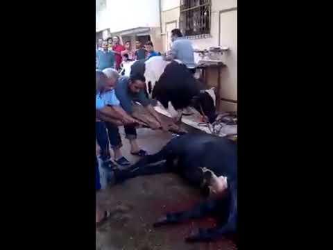 نتيجة بحث الصور عن ذبح العجل في الشارع