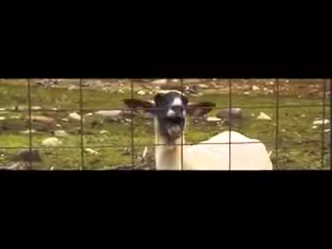 Taylor Swift – Troubled Goat  #Trend