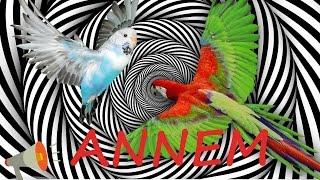 Papağan Ve Muhabbet Kuşu Konuşma Eğitim Annem Sesi Hazır Ses Kaydı 1 Saat