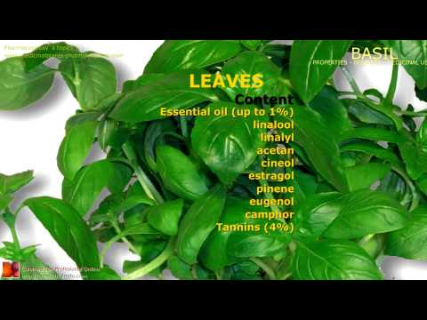 Basil benefits. Uses and medicinal properties of Basil plant, leaves