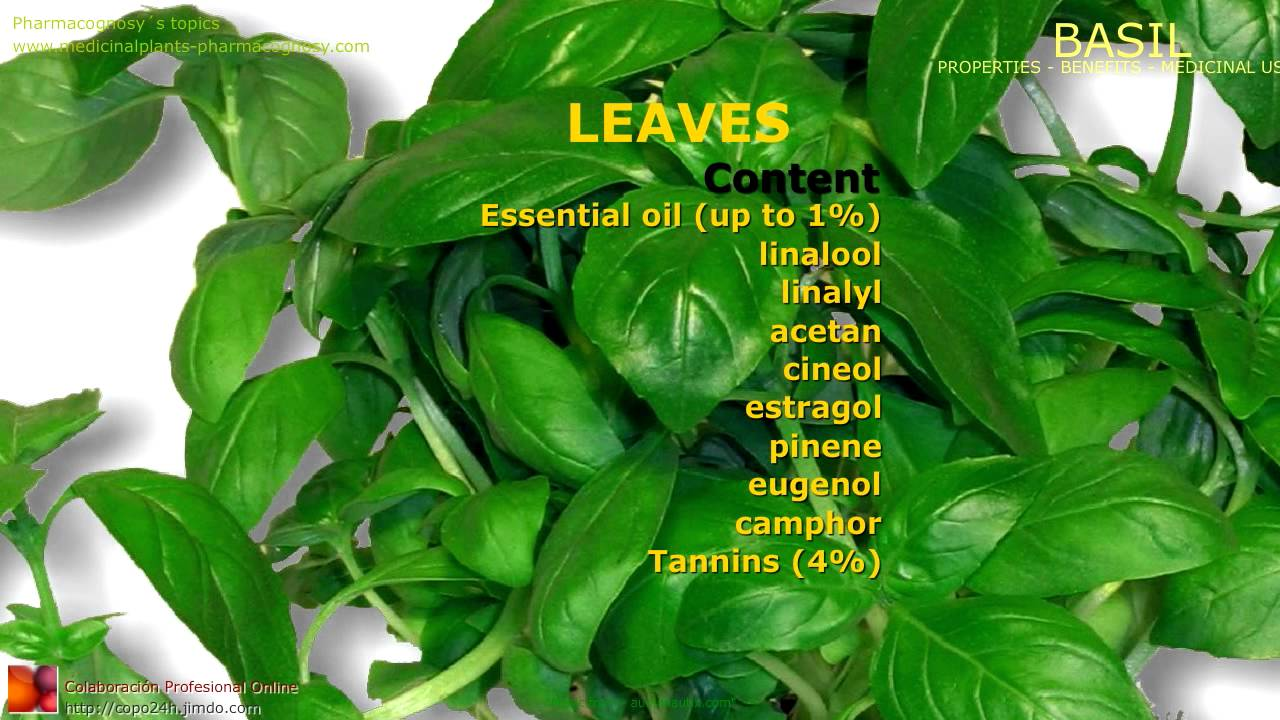 Basil benefits. Uses and medicinal properties of Basil ...