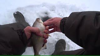 Зимняя рыбалка 2021 На гирлянду окунь а тут густера Зимняя рыбалка на Оке