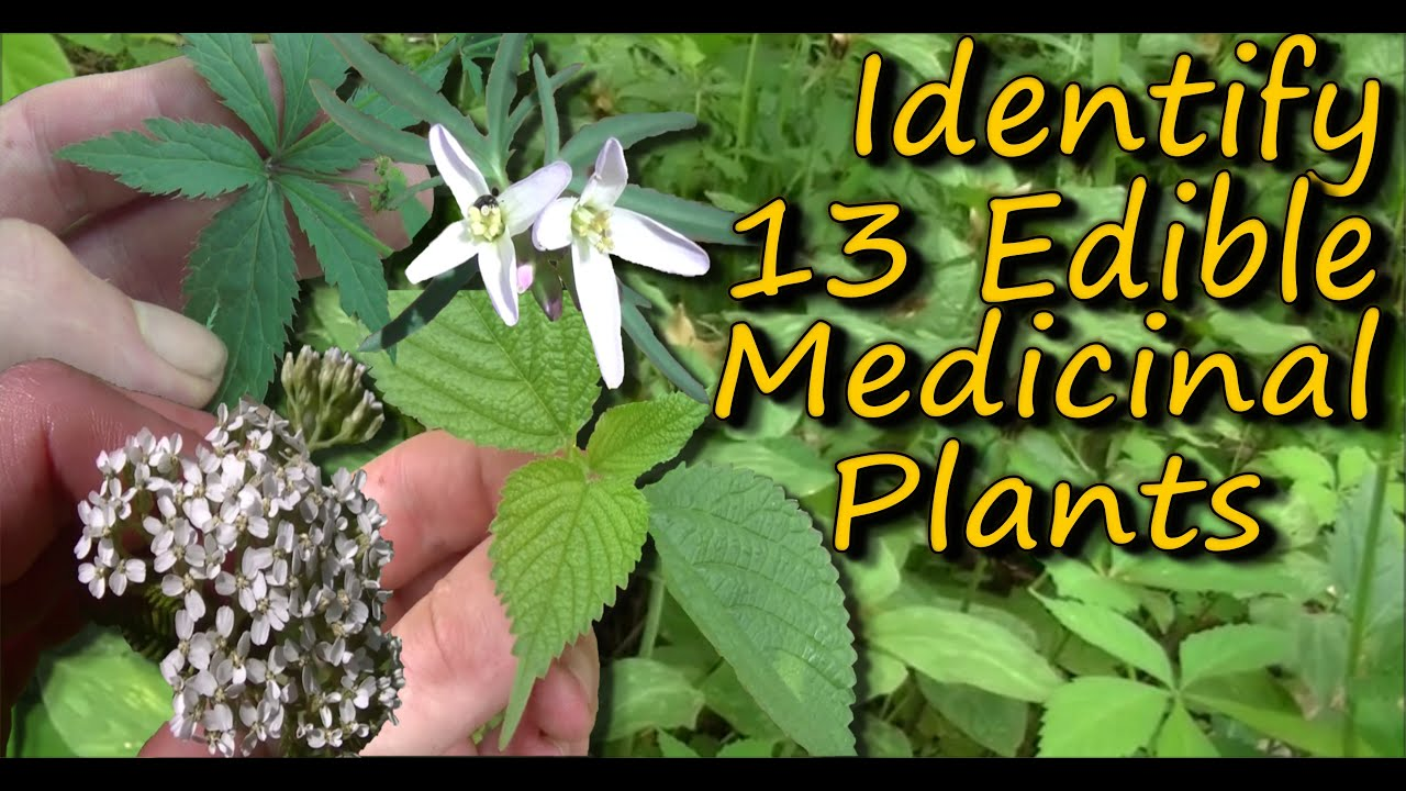 House plant identification tool - A Video Identification Guide To Edible Medicinal Plants Pt 2
