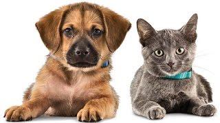Канада 889: Дорого ли обходится содержание домашних животных