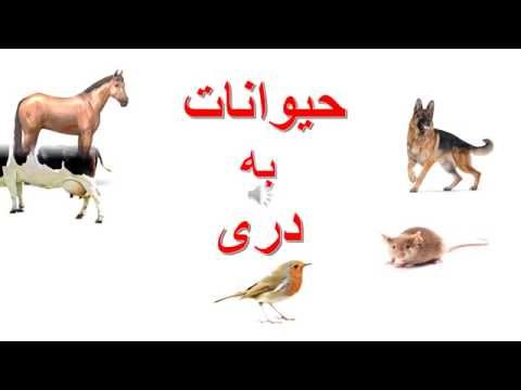 Animals in Dari