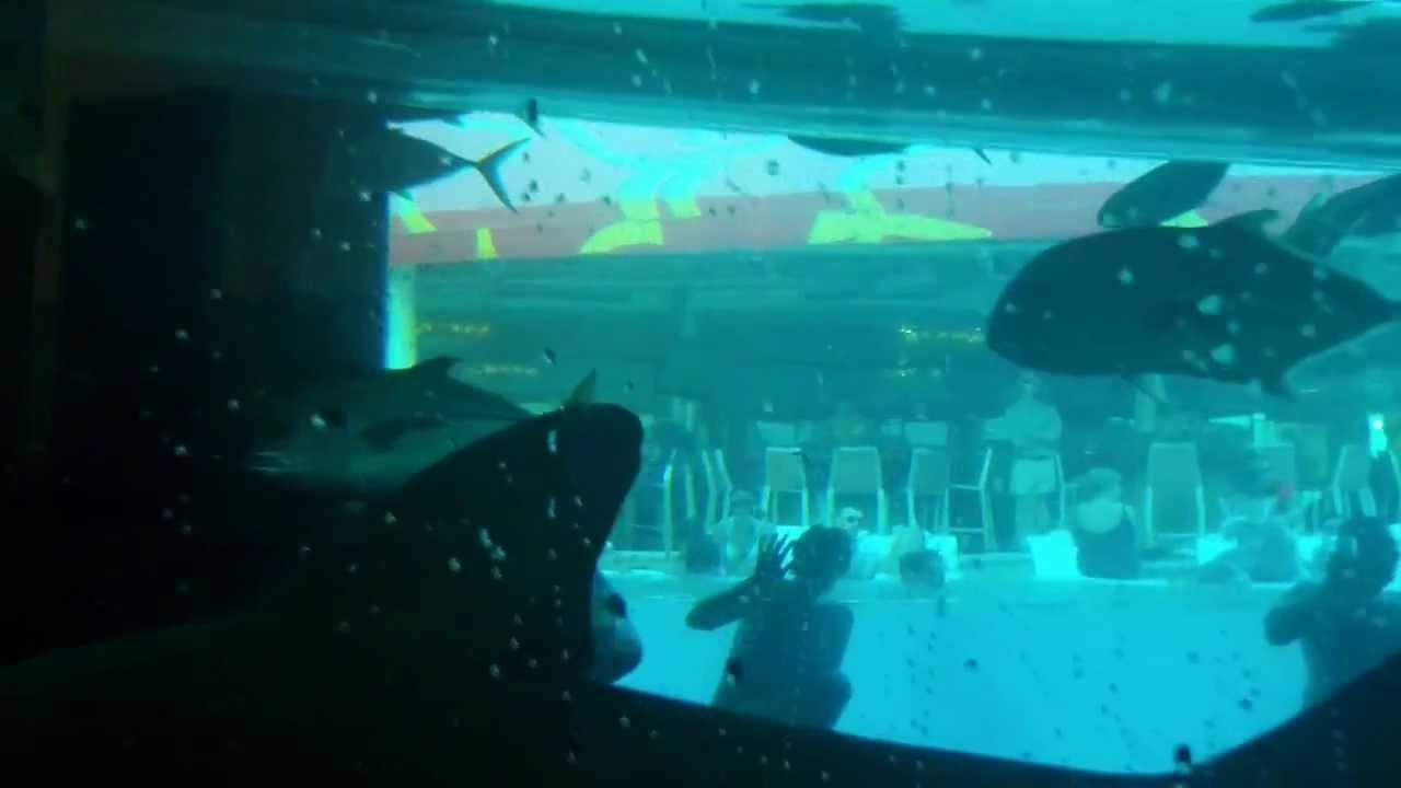 Nager avec les requins en piscine youtube - Nager avec les dauphins en piscine ...