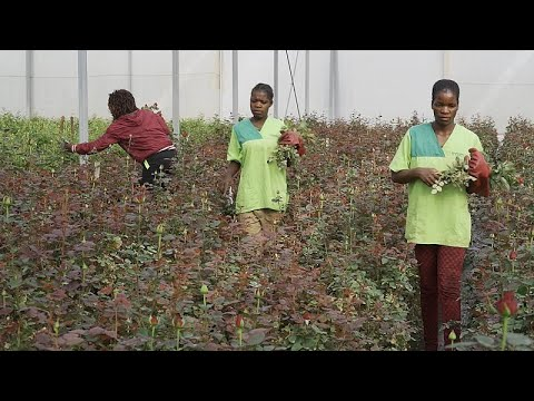 شاهد: رائدات أعمال يستفدن من الجائحة لتطوير نشاط شركاتهن الصغيرة في أنغولا…  - نشر قبل 3 ساعة