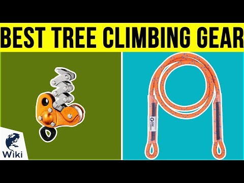 10 Best Tree Climbing Gear 2019