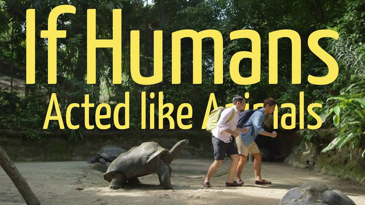 If Humans Acted Like Animals Ft Eugena Bey YouTube - 22 animals acting like humans