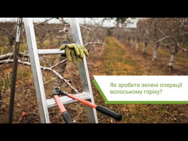 Як зробити зелені операції волоському горіху?