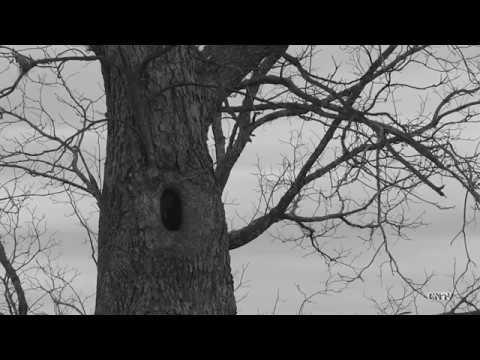 Cherokee Ghost Stories