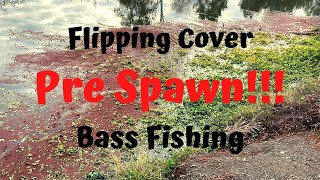 Flipping Cover for Pre Spawn Big Bass in San Jose on 12lb Fluoro