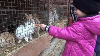 ОЧЕНЬ ИНТЕРЕСНОЕ ВИДЕО ДЛЯ ДЕТЕЙ Зоостудия КОВЧЕГ Кормление зверей Милашка Zoo Animals