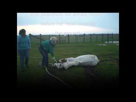 Horse Humane Euthanasia